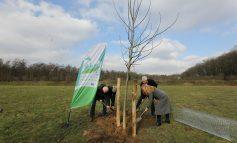 Stichting Zevenheuvelenloop krijgt eigen boomgaard