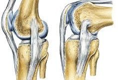 Kraakbeen herstelt zichzelf, ook na 4.500 kilometer hardlopen