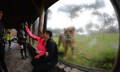 Safari Run tijdens Warandeloop: een schot in de roos